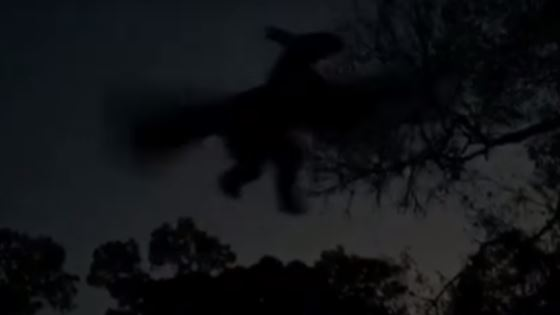 Jersey Devil Sighting